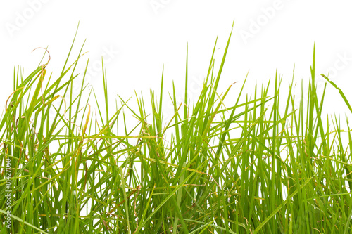 herbe sur fond blanc © Unclesam