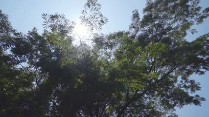 sun light shining through the tree, tilt shot