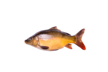 tench fresh raw fish isolated on white background, clipping path
