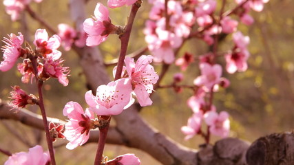 Spring blossom background.
