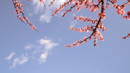 Blooming trees.