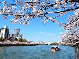 春の毛馬桜之宮公園