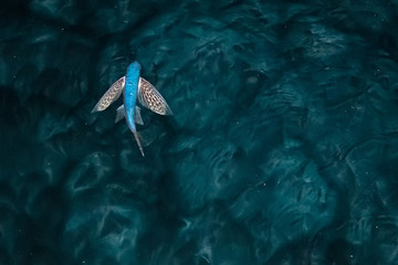 Flying Fish at night