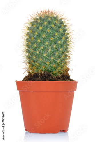 Foto op Aluminium Cactus Potted green cactus isolated on white background