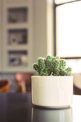 Small cactus in a room