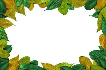 Summer Leaves frame