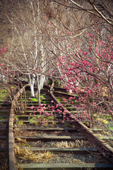 Old railroad track overgrown with trees in spring