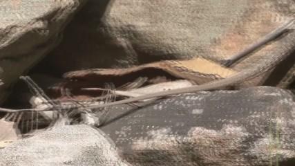 tracking lizard