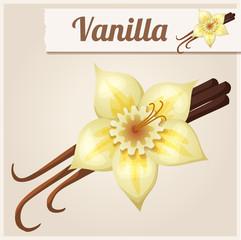 Vanilla. Detailed Vector Icon