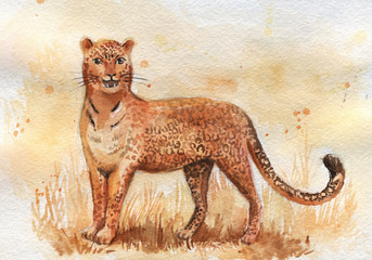 watercolor hand drawing leopard