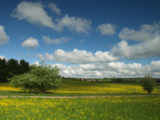 rural landscape with yellow flowers