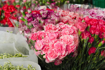 Beautiful carnation in flower market, Thailand