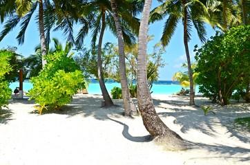 Malediven, Palmen