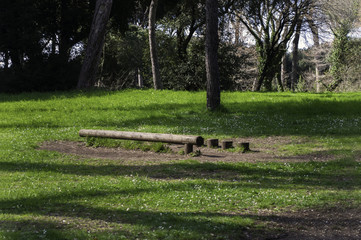 Parco con tronchi abbattuti