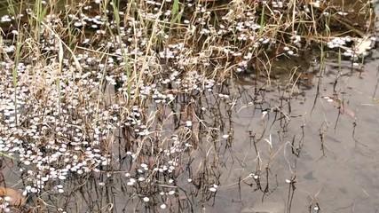 池に落ちた桜の花びら
