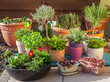 Flower pots - 81451857