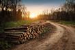 Leinwandbild Motiv Deforestation industry