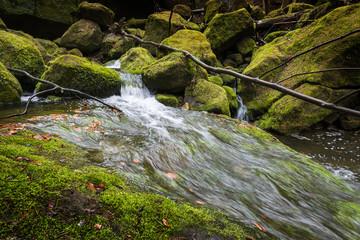 river in forest - Czech saxon switzerland