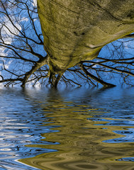 old tree and water level