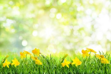 Karte Frühling