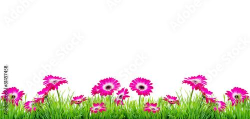 Foto op Canvas Gerbera Freisteller Blumen