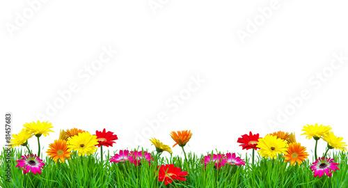 obraz PCV Kwiaty kolorowe Freisteller Karte