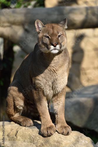 Aluminium Puma Puma