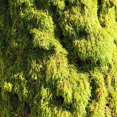Moss on sun