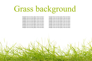 Isolated young grass on white background