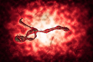 Medical illustration of the Ebola virus