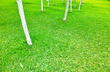 南国の芝生