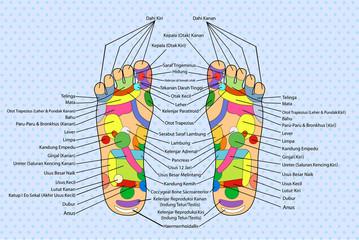 Acupuncture - Foot Scheme (Indonesia Language)