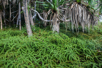 Tropical Forest on Island