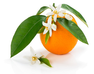 Orange with blossom and leaves
