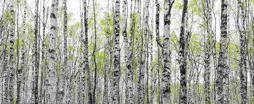 Fototapete waldweg  Wald Fototapete günstig kaufen | Fototapeten | Bildtapete ...