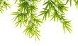 bamboo leaves isolated on white background - 81471407