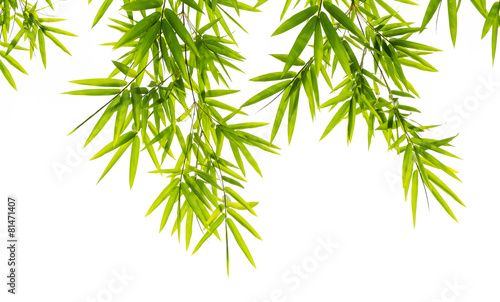 Fotobehang Planten bamboo leaves isolated on white background