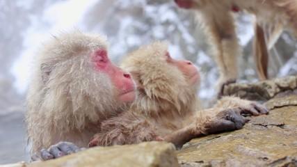 Hot Spring Snow Monkeys