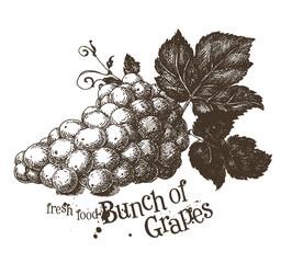 grapevine vector logo design template. vine or fresh food icon.