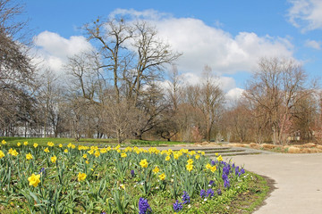 Frühling im Ostpark - Spazierwege und Blumenbeet mit Osterglock