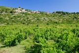 Vineyard and small village on island Vis in Croatia