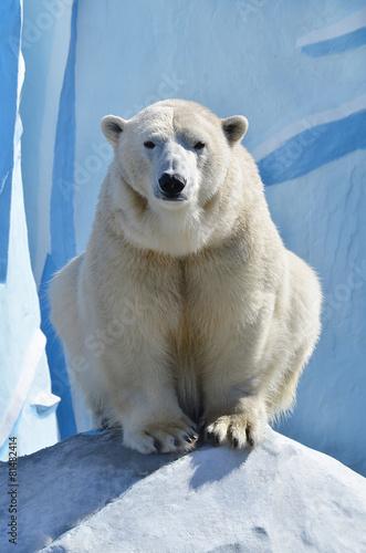 Aluminium Ijsbeer Белый медведь.