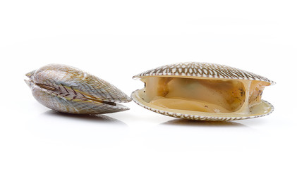 Fresh raw Surf clam on a white background