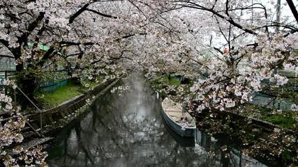 桜散る風景