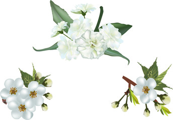three spring tree blossoms isolated on white