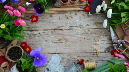 Garden tools and flowers on wooden background