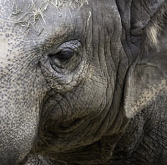 Elephant Protrait