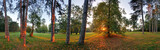 Panoramic view of forest, 360 degree - 81490601