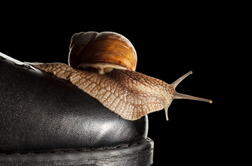 Snail and boot