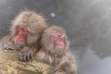 温泉を楽しむおさるさん the monkey of the hot spring